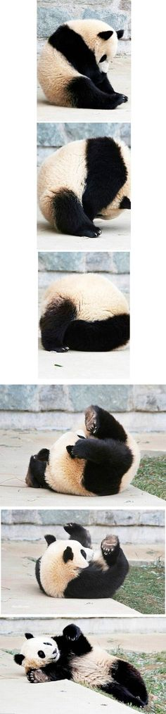 Pandas are the coolest!