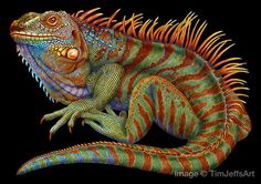 Iguana 2 Colored Pencil Drawing. Signed by Artist by TimJeffsArt