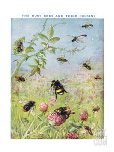 The Busy Bees and their Cousins Giclee Print by Maud Scrivener at Art.com