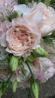 David austin rose...♥