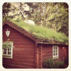Wooden house with moss roof @ Skansen, Stockholm