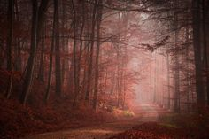 Mysterious and fascinating forest photographs by Heiko Gerlicher 14
