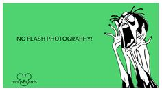 No Flash Photography Disney Dream, Disney Love, Run Disney, Disney Parks, Walt Disney World, Disney Pixar, Disney Stuff, Funny Disney Memes, Funny Memes