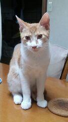 里親さんブログ多頭崩壊からやってきた子猫達…無事里親様と巡りあえました。 - http://iyaiya.jp/cat/archives/81121