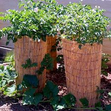 Bamboo screen potato towers - by the rural society of warwick