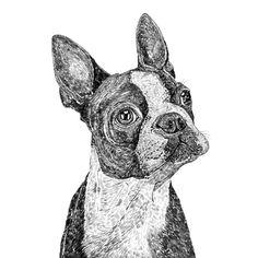Ros Shiers - Basil the Boston Terrier Print