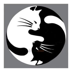 Yin Yang lucky cat tattoo - this would be nice with a watercolor wash instead of black CAT AND DOG YING YANG Yin Yang Tattoos, Tatuajes Yin Yang, Lucky Cat Tattoo, Tattoo Cat, Tiny Tattoo, Small Tattoos, Art Pierre, Kitty Tattoos, Cat Drawing