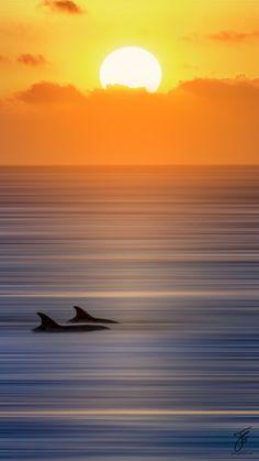 lifeistooshortdont: theperfectworldwelcome: earthandanimals: Dolphin Sunrise by Johny Spencer Beautiful !!! \O/ :-)