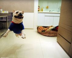 Look Ma I is a flying