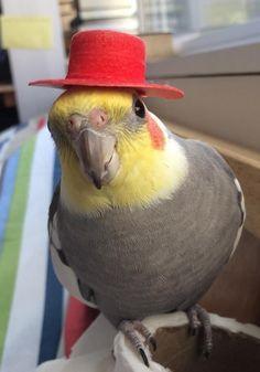 Like my hat?  I do!  :)