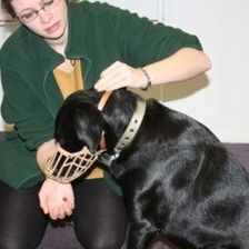 Muzzle Training - A step-by-step guide