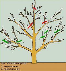 Garden Posts, Garden Trees, Garden, Summer House Garden, Growing Plants, Fruit Trees, Pruning Apple Trees, Outdoor Gardens, Garden Plants