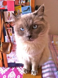 I'm Toulouse, the blogging cat. Read about me on my blog www.angelicatales.wordpress.com