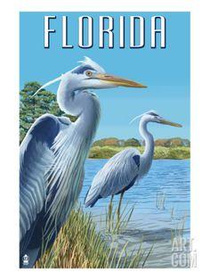 Key West, Florida - Blue Heron - Lantern Press Artwork Giclee Gallery Print, Wall Decor Travel Poster), Size: 36 x 54 Giclee Print, Multi Florida Blue, Vero Beach Florida, Sarasota Florida, West Florida, Apalachicola Florida, Tallahassee Florida, Vintage Florida, Myakka River State Park, Seabrook Island