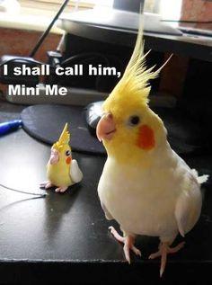 Caption Birds: 14 Funny Bird Photos