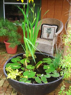We made this water garden in a large plastic pot.