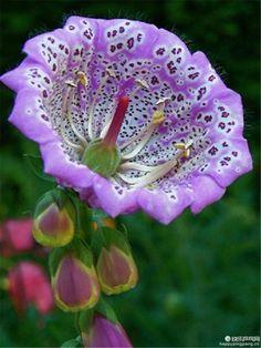 Flowerbeauty