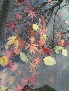 Autumn and rain in Seoul,,,♥