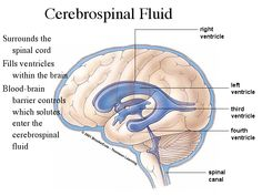 Cerebral Spinal Fluid....and causes a bunch of side effects...IIH/PTC