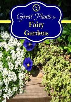 5 Great Plants for Fairy Gardens.  Cross reference with NC Toxic Plant List.