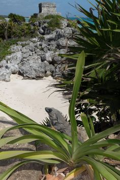 C 21 Tulum Viva la cancun on Pinterest | Playa Del Carmen, Cancun and Cancun ...