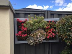 Living pictures | Plants | Gumtree Australia Gosnells Area - Southern River | 1163892919