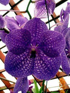 Purple orchid... @rt&misi@.