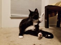 Please pray for my cat she is having a hard time getting her Yoga business off the ground. http://ift.tt/2tOp0yJ
