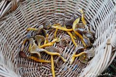 Kuistin kautta: Syysloman sieniretki