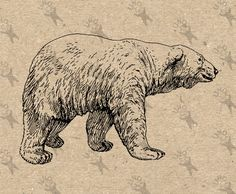 Polar Bear Vintage retro drawing image Instant Download Digital printable black and white clipart graphic for Transfers iron on HQ 300dpi by UnoPrint on Etsy