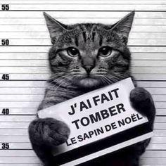 Chat délinquant .