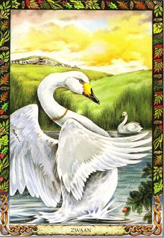 Swan | The Druid Animal Oracle by Stephanie and Phillip Carr | Meaning: soul, love and beauty | Reversed: it means that one may have to come to terms with a separation.