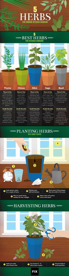 The experts at Fix.com share their favorite herbs for kitchen gardens: Take a look at this fun infographic to learn how to plant and harvest these herbs, as well as their benefits!