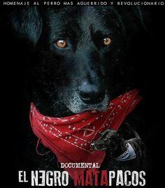 Documental: La historia del Negro Matapacos, el perrito que se convirtió en un símbolo mundial de la resistencia Drawings, Punk, Memes, Poster, Black, Gift, Surfing Pictures, Protest Art, Pictures Of Dogs