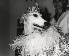 [Lady Greyhound, the Pompous Pooch, New York], © Weegee Archive/International Center of Photography Buy Prints Online, Museum Photography, Weegee, Photo Store, Magic Eyes, Woman Smile, Grey Hound Dog, Magnum Photos, Science Art