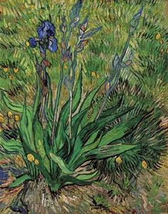 Vincent Van Gogh -  The Iris (1889)