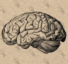 Vintage Anatomical Brain Clip Art Design Transfer от UnoPrint
