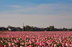 Nieuwe-Tonge by BraCom (Bram), via Flickr