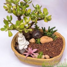 Indoor Zen Garden, Fairy Garden Pots, Mini Zen Garden, Small Balcony Garden, Dish Garden, Miniature Zen Garden, Miniature Fairy Gardens, Succulent Pots, Succulents Garden