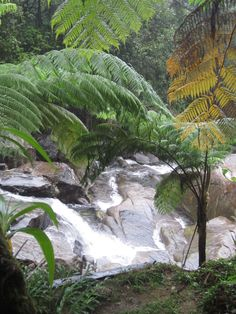 El  Yunque Rainforest river, Puerto Rico Stay with us at our Hostel! Enjoy the real Puerto Rico, visit us at www.islandtimehostel.com