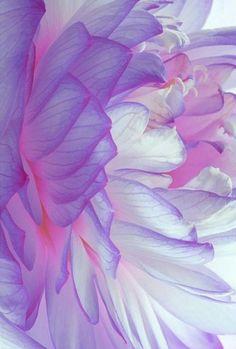 Flor …..