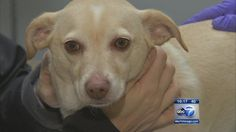 Canine Flu outbreak in Chicago kills 5 pets thus far and is moving fast. The best advice for dog owners is to get the vaccine.