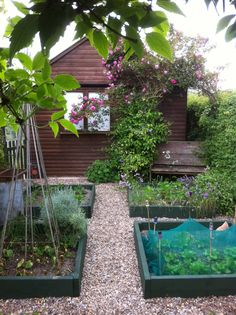 Sweet little veg patch. Keep things small so you can keep on top of the work