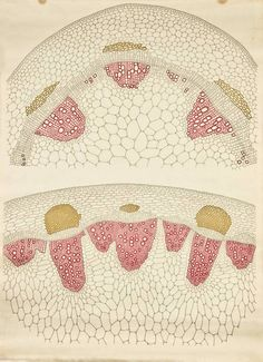 What a radical idea for a pattern!! (Vegetal Anatomy - Frederic Elfving)
