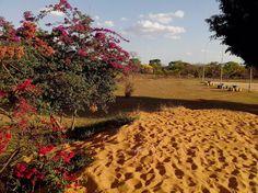 A9 - Em tempos de seca, árvores floridas se destacam.
