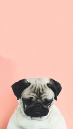 Imagen de dog, pug, and sad