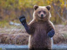 1photo: The Bear – Just Hi