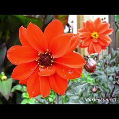 Red Nature Dress #floralhub #ptk_flowers #bns_flowers #rsa_flowers #lys_flowers #heavenlyflowerz #quintaflower #rsa_ladies #bns_ladies #bns_garden #rsa_nature #instagardenlovers #splendid_flowers #superb_flowers #naturehippys #nature_sultans #9garden9 #9vaga9 #9flower9 #heavenlyvaga #123flowerscolors #flowersturk #flowerstalking #my_daily_flower #flowercandy #macroclique #macrocaptures #instagardenlovers #eye4flowers