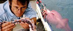 Colossal squid... Eeeeek!!!