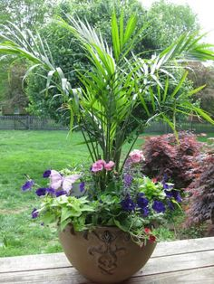 Container garden. Palms. Annuals.